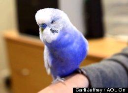WATCH: Bird Does An Uncanny R2-D2 Impression