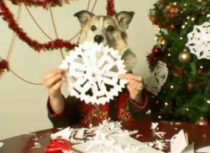 Dogwrap