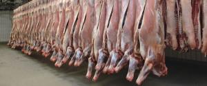 Slaughterhouse Beef