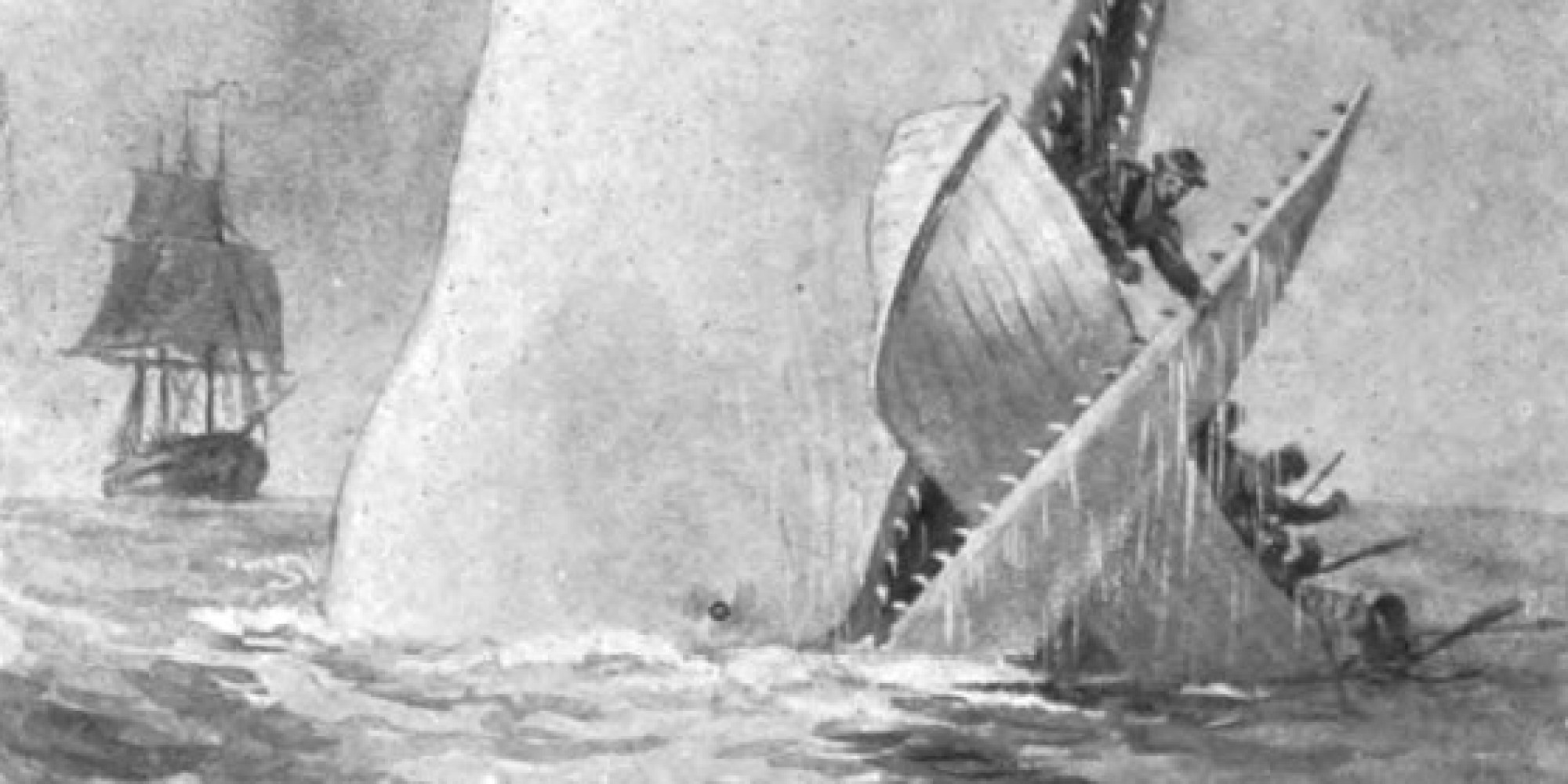 5 scientific inaccuracies you didn t know were in moby dick 5 scientific inaccuracies you didn t know were in moby dick the huffington post