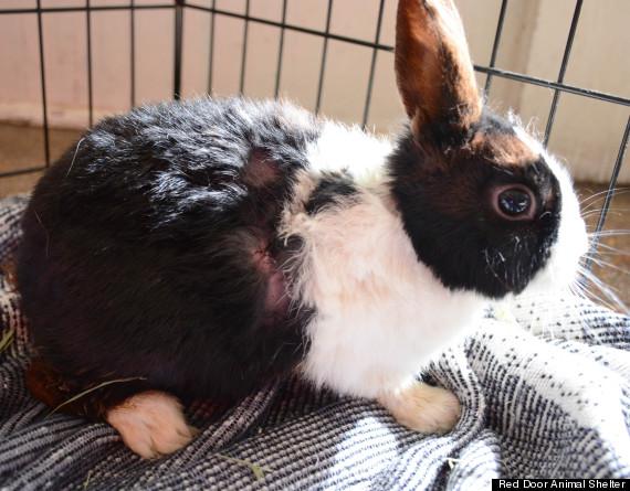 ping rabbit