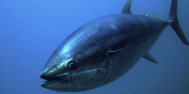 Mexico scores trade win in tuna dispute with U.S.