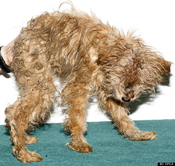 ladysmith puppy