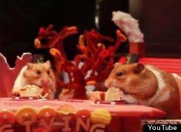 Pequeño hámster disfruta de un mini banquete de Acción de Gracias