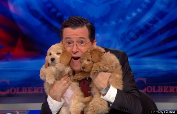 colbert puppies
