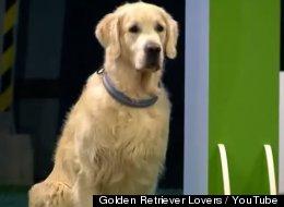 Este perro se portó muy, muy mal durante una competencia de obediencia