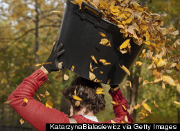 Don't Rake Leaves: Here's The Science