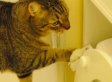 This Cat Learned To Flush the Toilet - Can You?