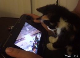 This Kitten Plays Nintendo And The Internet Melts