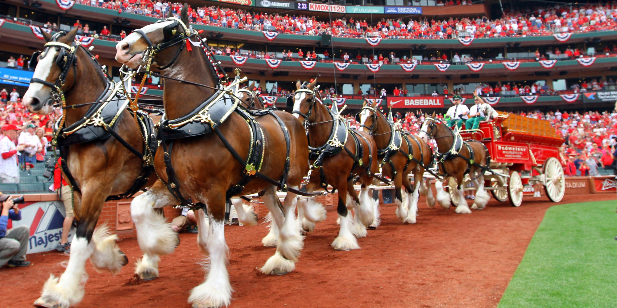 Budweiser Cans Clydesdales For Edm Zombies And Jay Z