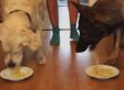 When Dogs Have A Spaghetti-Eating Contest, Everyone Wins