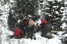 A Christmas tree topples over | Pic: AFV