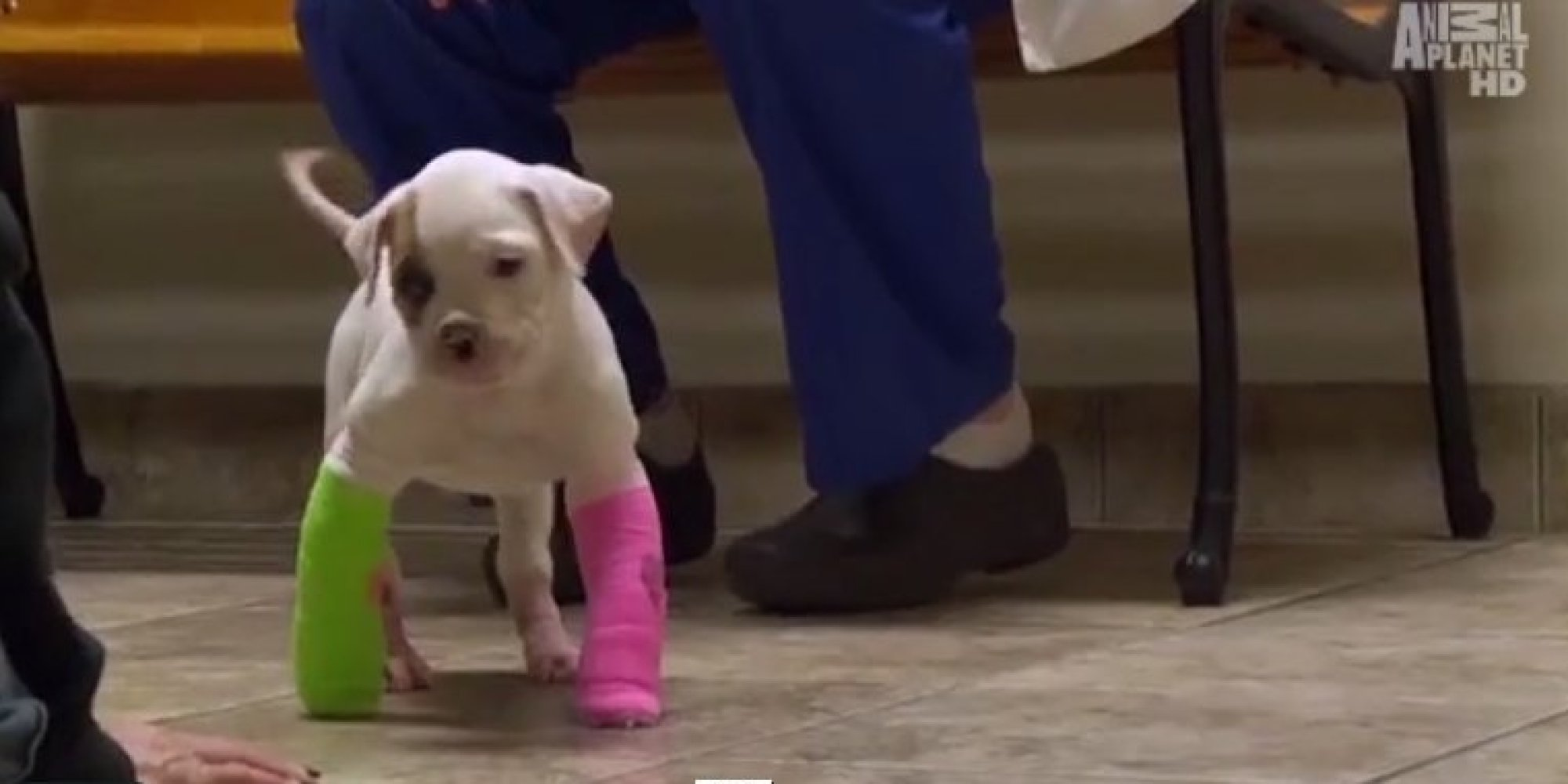this abandoned puppy with a deformity didn t give up