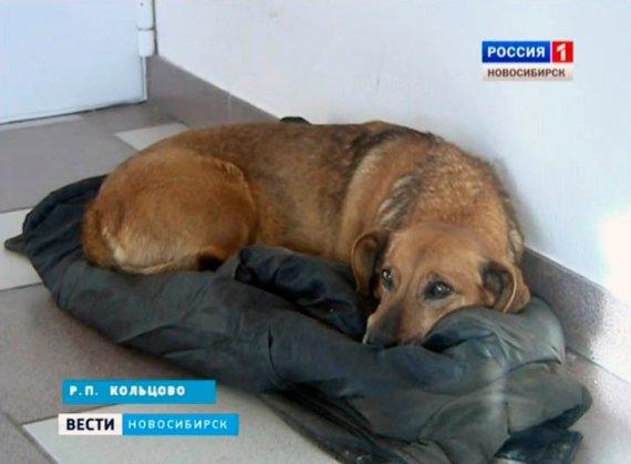masha dog
