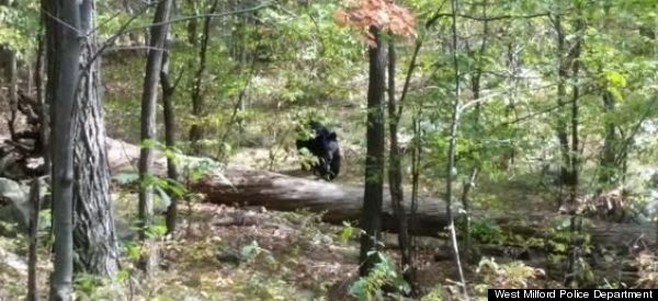 This Is The Photograph A Student Took Of A Bear Moments Before It Killed Him