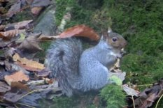 Squirrel | Pic: YouTube