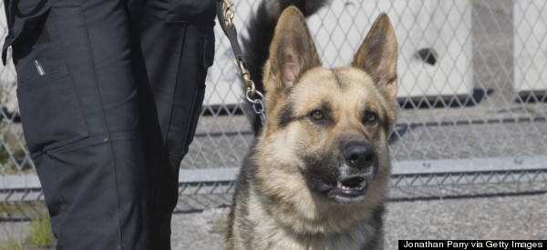 BAD DOG! Police Pooch Fired