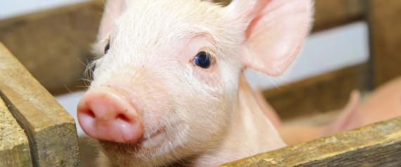 warum wir hunde lieben und schweine essen sebastian z sch. Black Bedroom Furniture Sets. Home Design Ideas