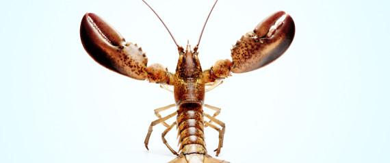 Httpshuffingtonpostdr steve taylorhiv n lobster large570g fandeluxe Gallery