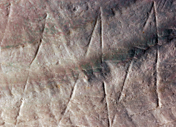 coquillage prehistoire zigzag