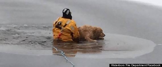 waterboro frozen lake dog