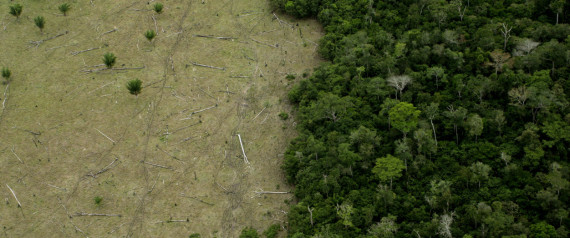 AMAZON DEFORESTATIONA