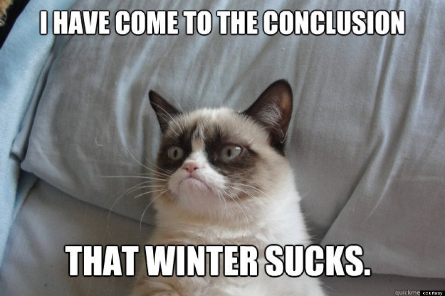 grumpy cat winter