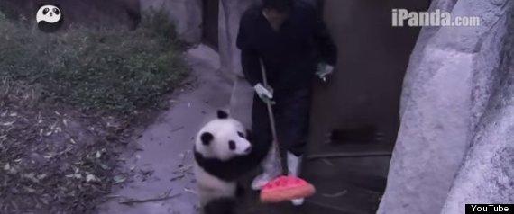 panda broom