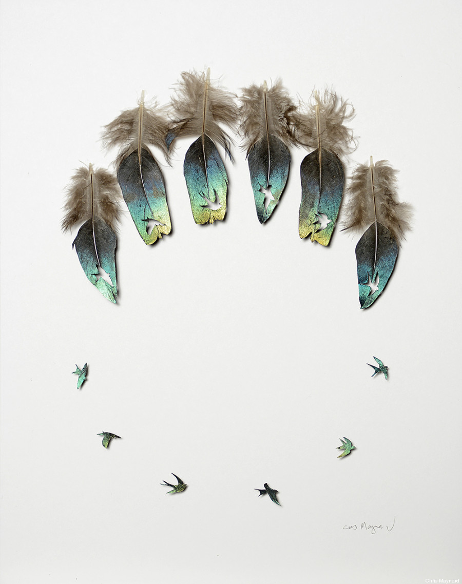 plumes chris maynard