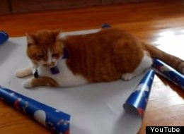 How To Gift Wrap Your Cat This Christmas
