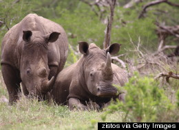 The Best Vacation Ever? Cuddling Orphaned Baby Rhinos
