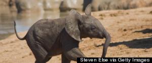 BABY ELEPHANT AFRICA