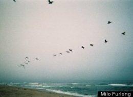 PHOTOS: 11 Spots To Birdwatch Near LA