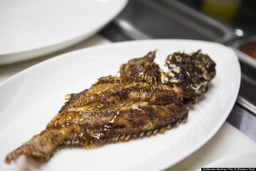 lionfish 007