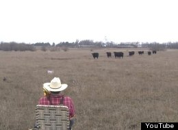 Farmer Serenades Cows With 'Jingle Bells' On The Trombone