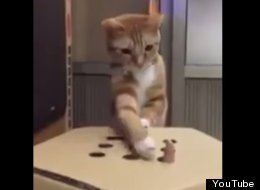 This May Be The Most Fun You Can Have With A Cat And A Cardboard Box