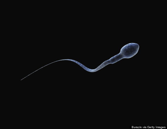 Images The Size Of Your Sperm Does Matter When It Comes To Getting Pregnant, Say Scientists | HuffPost UK 1 sperm
