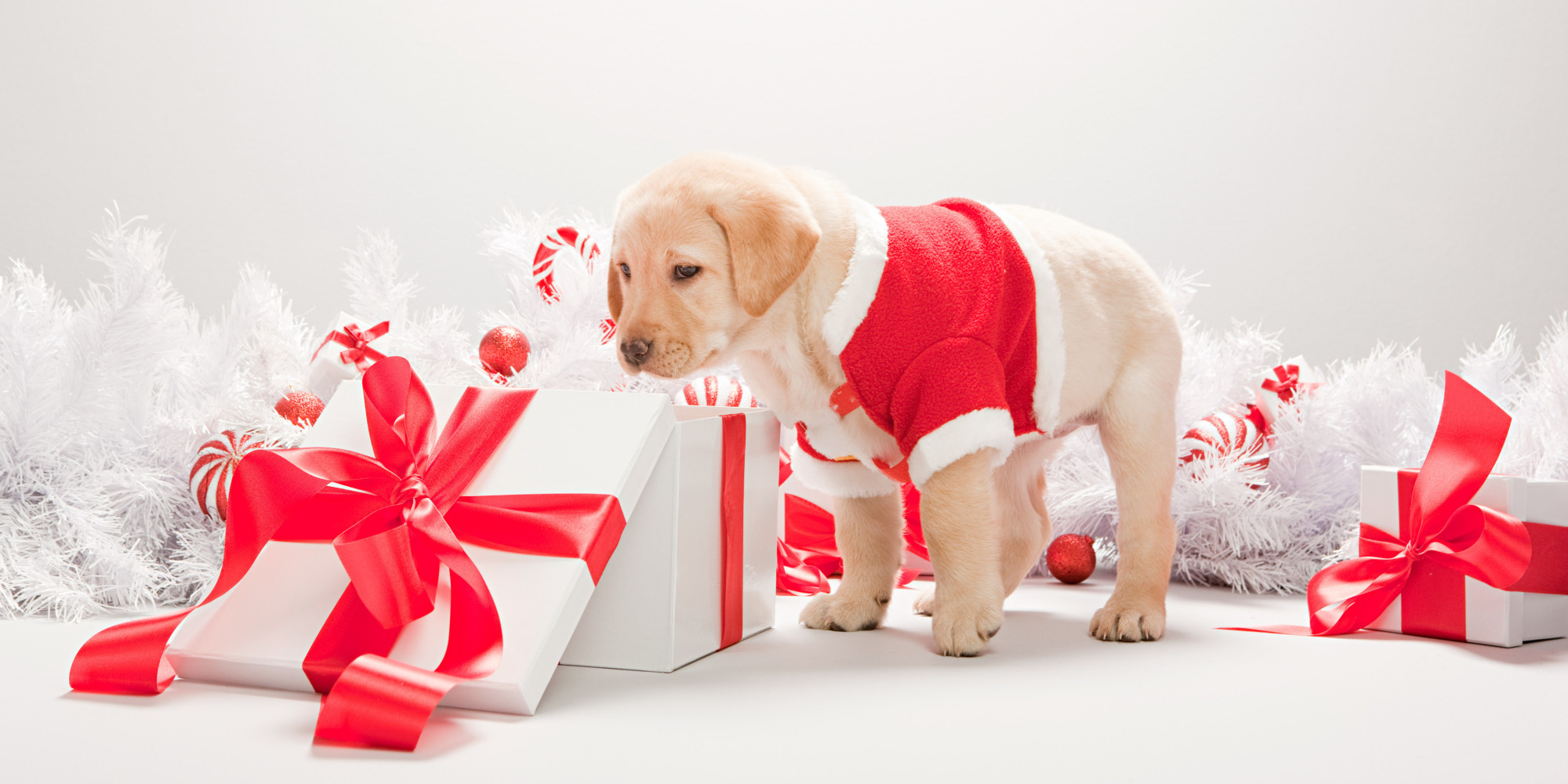 Pet Gift Ideas: What To Buy Your Dogs And Cats For Christmas