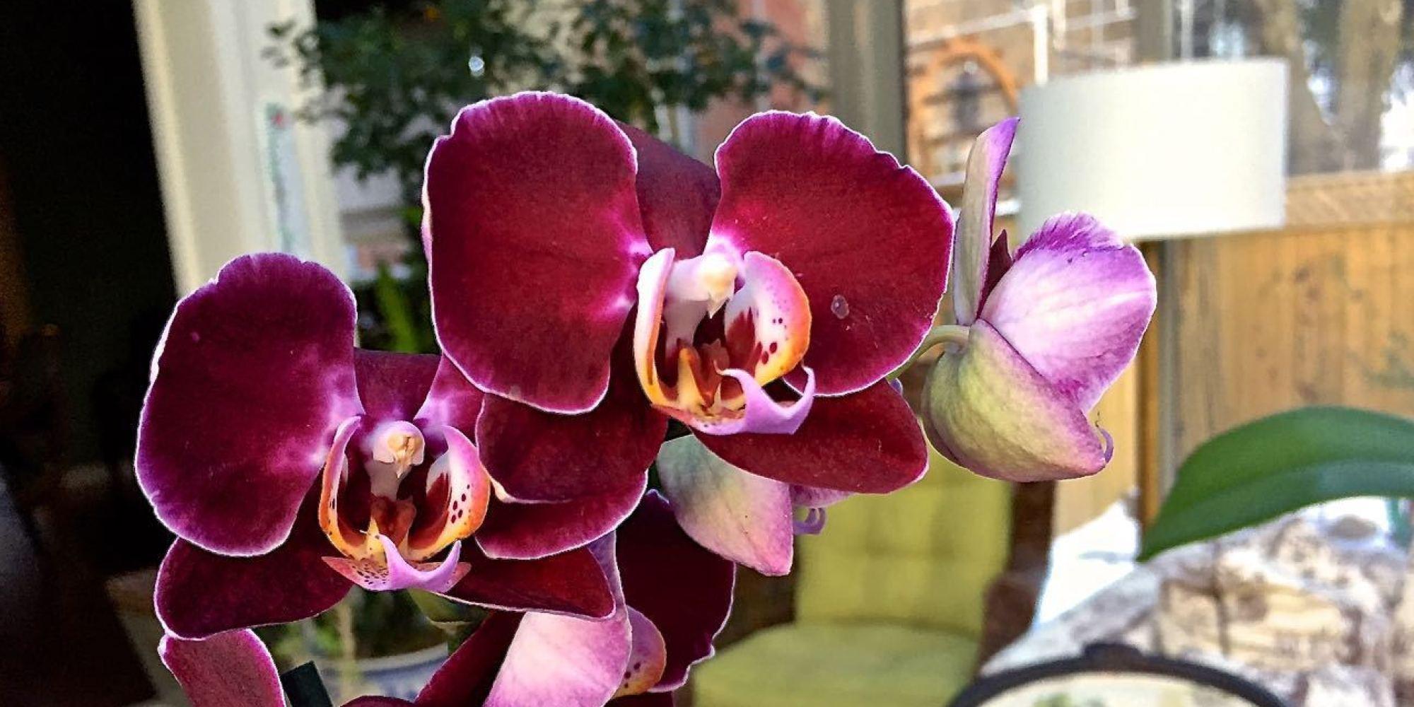 Comment cultiver et garder ses orchid es jean jacques revel - Comment garder une orchidee ...