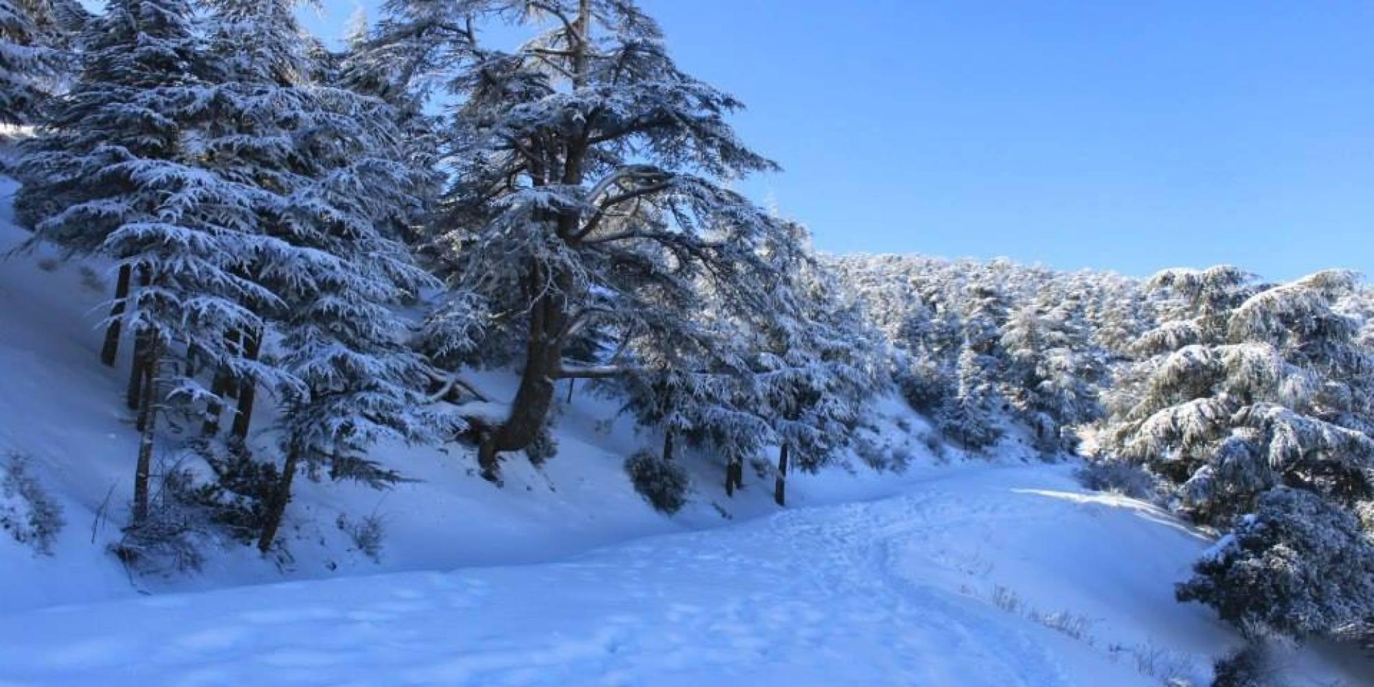 Le nord et l 39 est de l 39 alg rie sous la neige photos videos - La ren des neige ...