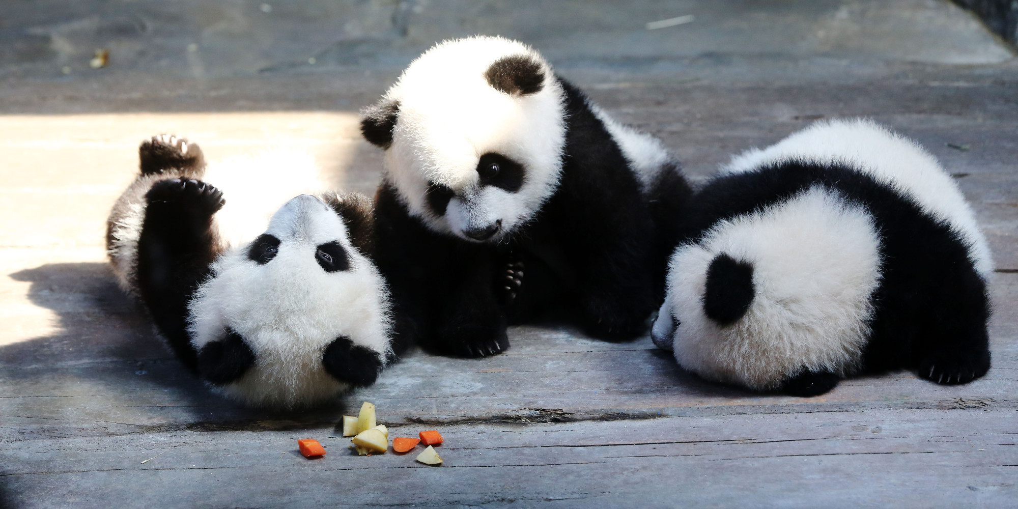 World S Only Panda Triplets Move In With Mom Who Hugs