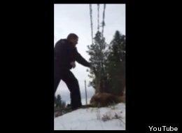 ► B.C. Mountie's Elk Rescue Warms Internet's Heart