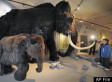 Mammoth Could Be Brought Back To Life In 4 Years