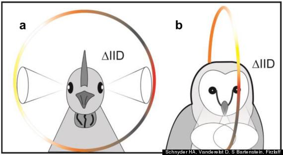 birds ears