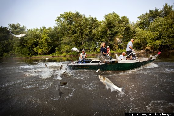 Jump Asian Boat Carp Louisiana Into