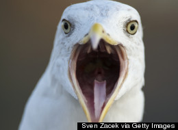 Here's Why Birds Don't Have Teeth