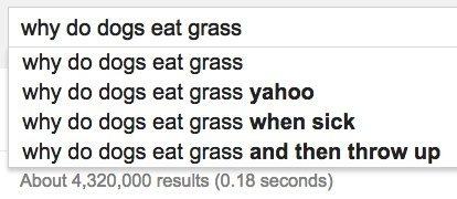 dogs grass google