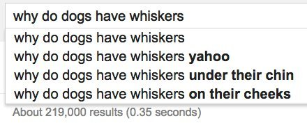 dogs whiskers google