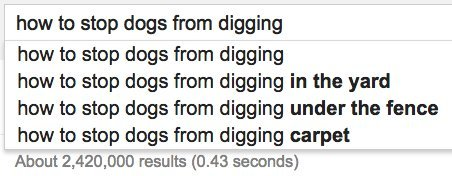 dogs digging google