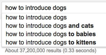 introduce dogs google
